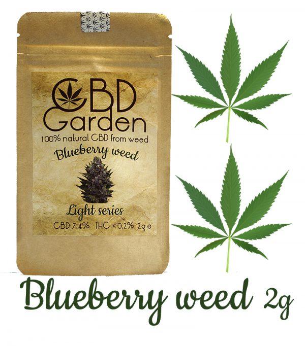 CBD Blueberry. Susz konopny