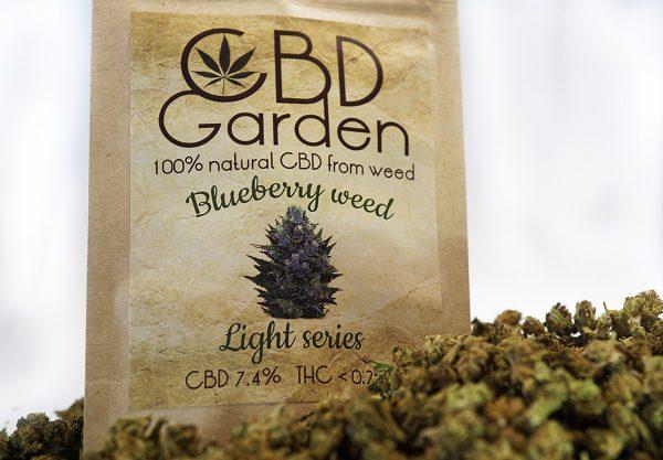 CBD garden susz konopny Blueberry kwaity